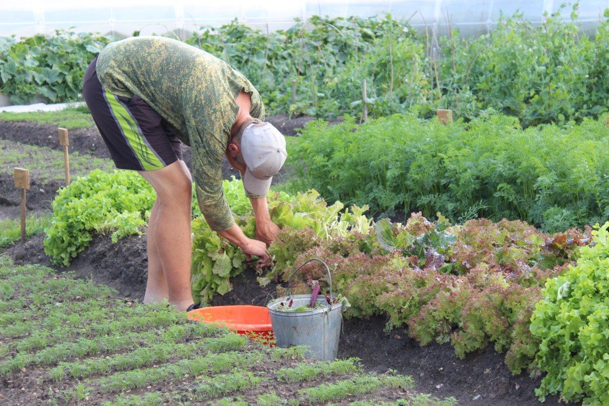 каждой огород без хлопот для пожилых фото приготовления лепешек нужны
